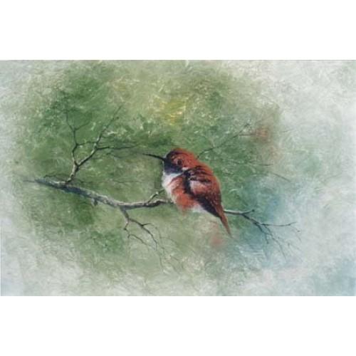 3334 RUFOUS HUMMINGBIRD