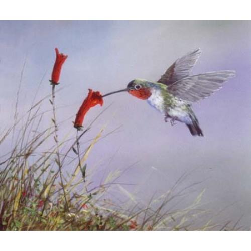 8857 HUMMINGBIRD